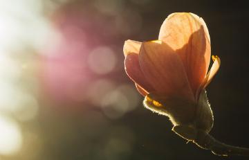 orange flower in sunlight