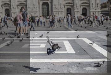 bird flying in street