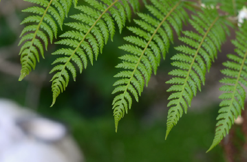 close up of ferns